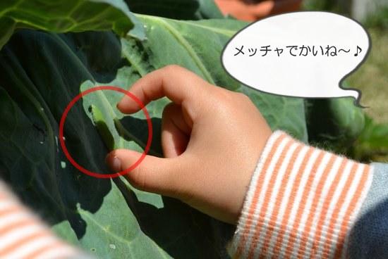 小学生が育てる野菜キット