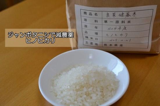 タニシで減農薬ヒノヒカリ