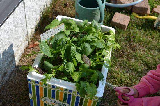簡単にできる野菜作りセット