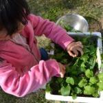 子供ができる家庭菜園