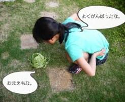 小学生の宿題 栽培キット