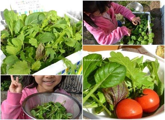 簡単にできる野菜作り